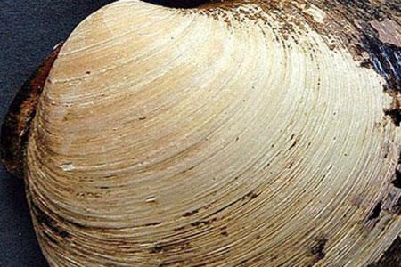 Organisme Berusia 507 Tahun ini Disebut-sebut Organisme Tertua